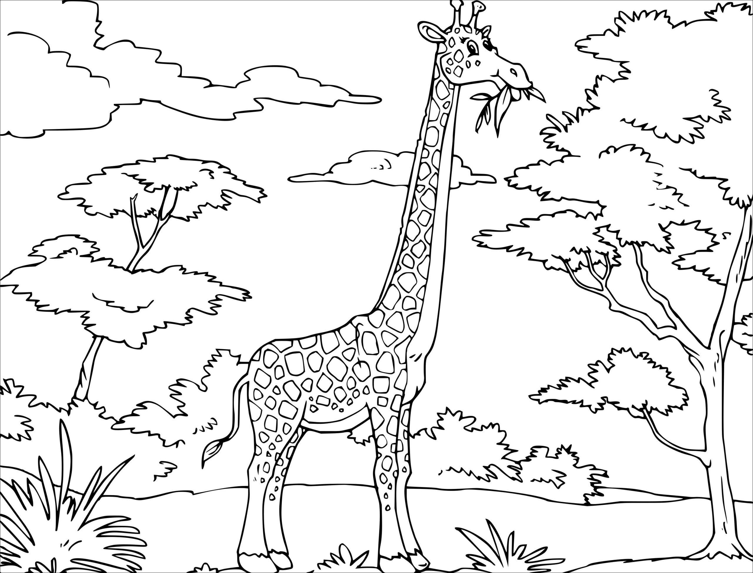 21 Premier Coloriage Girafe A Imprimer Collection Boek Bladzijden Kleuren Dieren Kleurplaten Gratis Kleurplaten