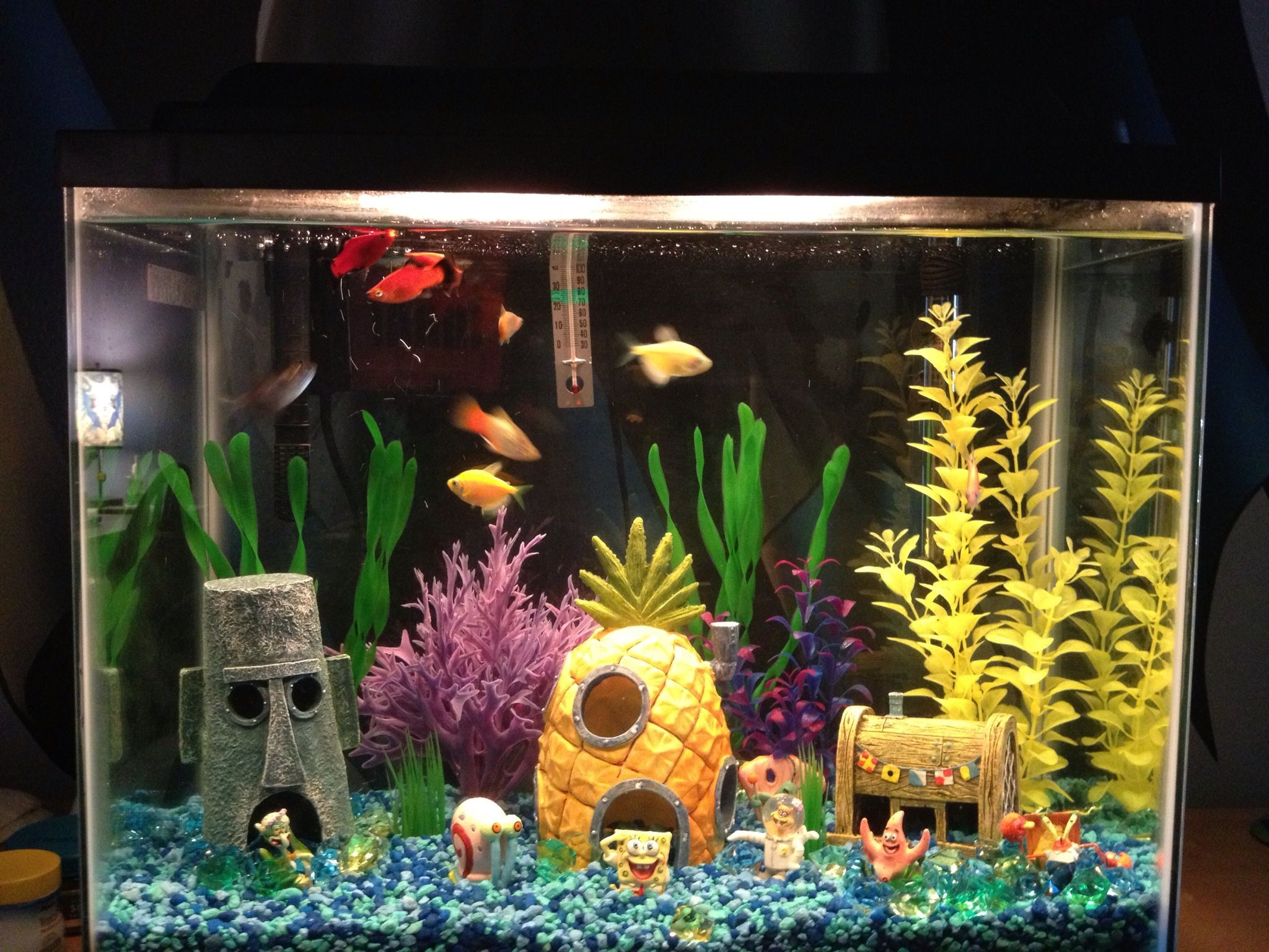 My Son S Sponge Bob Inspired Fish Tank Cool Fish Tanks Fish