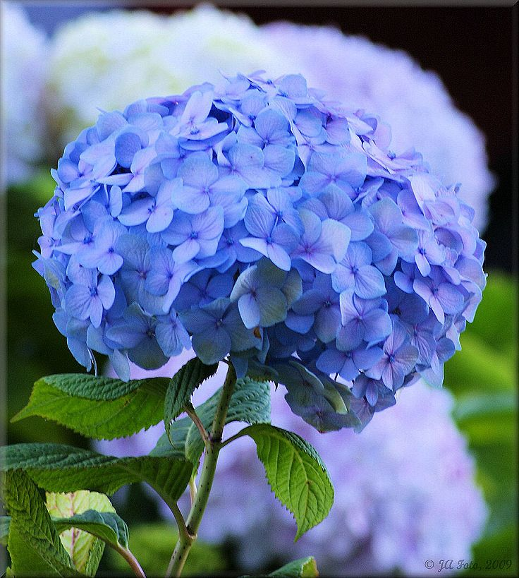 purple flowers, so beautiful Blue flower names, Blue