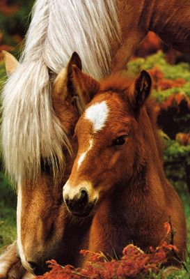 POSTER Mare and Foal