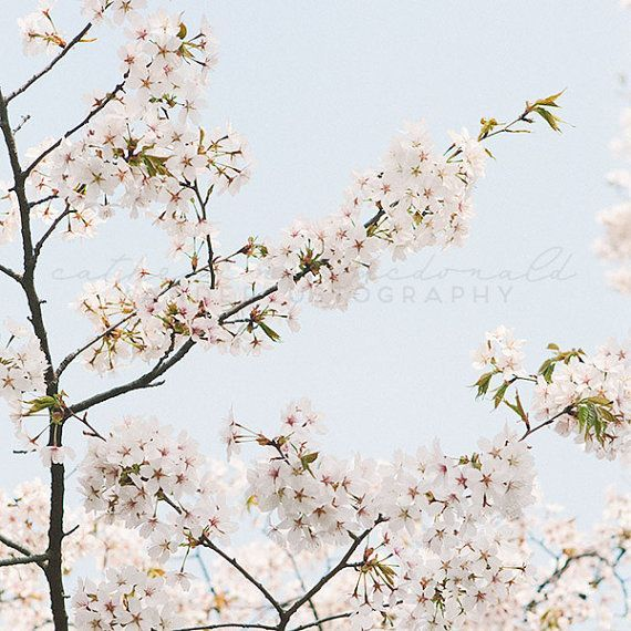 Pin By Kathy Fanning On Buy Me This Cherry Blossom Art Cherry Blossom Blossom