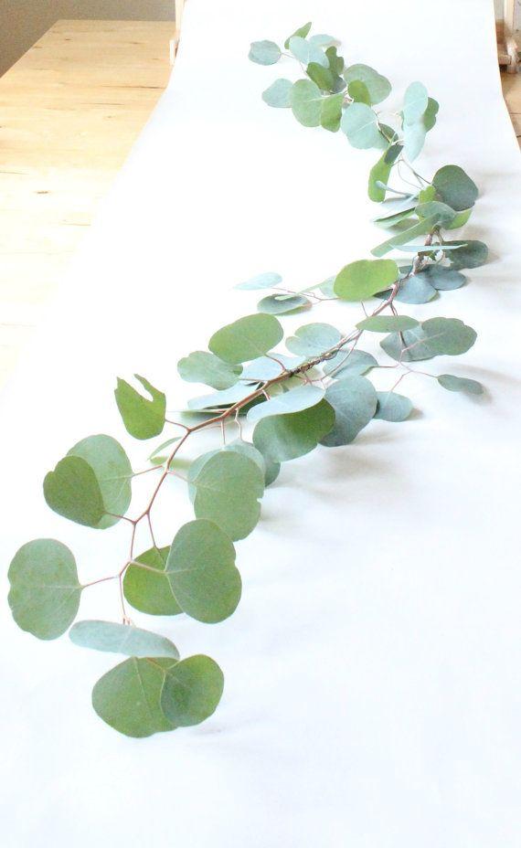 Fresh Six Foot Thinned Silver Dollar Eucalyptus Garland