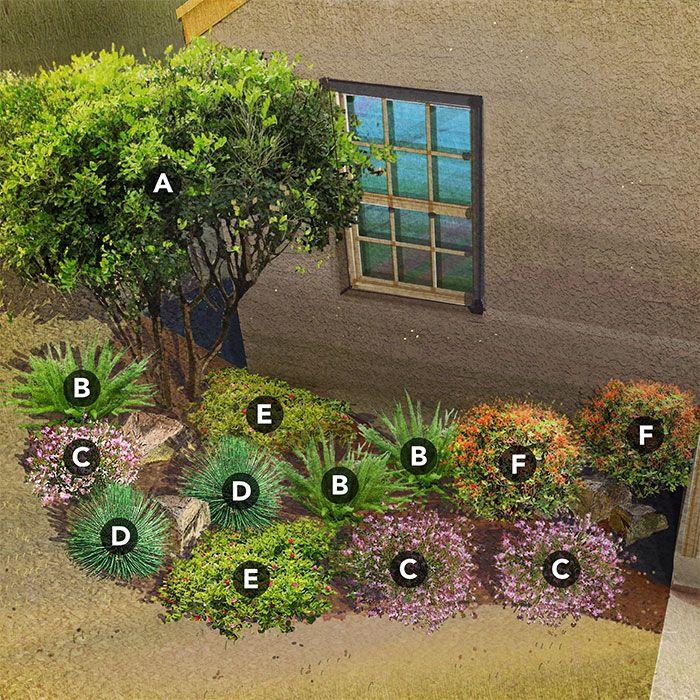 Shade Garden Plan For Southwest Desert Region Featuring Texas Mountain  Laurel, Foxtail Fern, Whirling