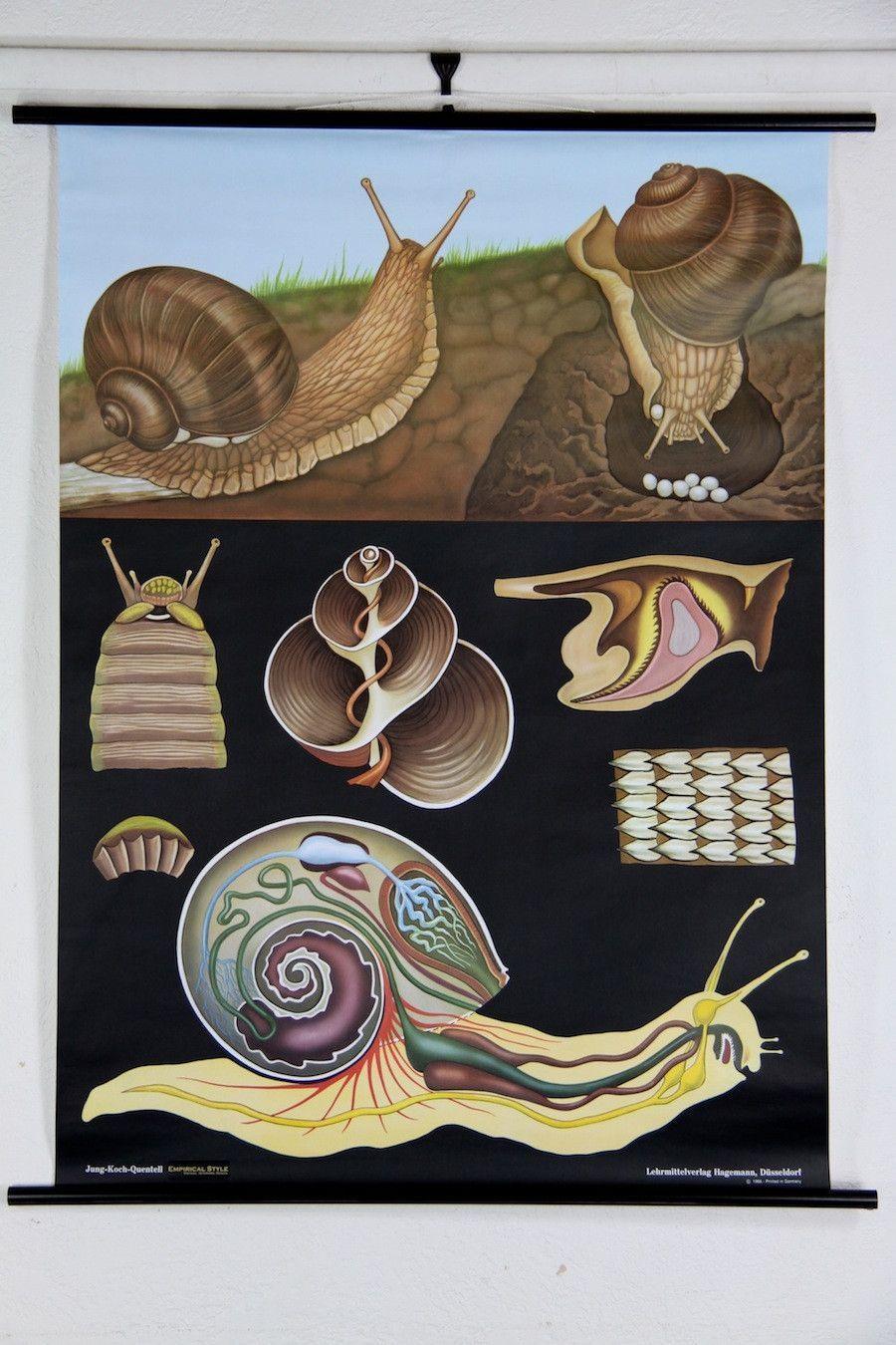 Snail Zoology Wall Chart | Schnecke, Keramik und Gärten