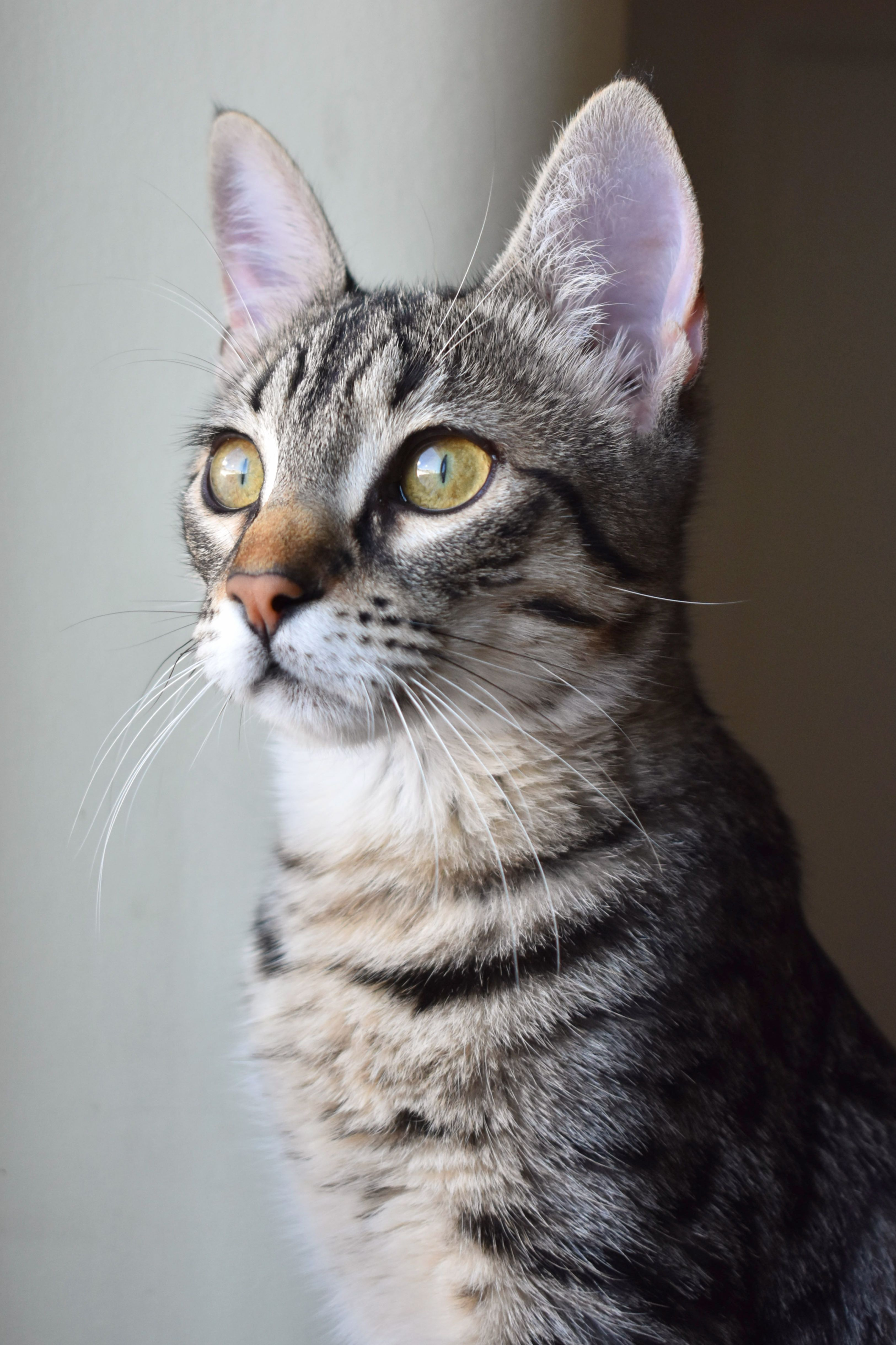 5 Impressive Cat Portraits Close Up Photo Of Brown Tabby Kitten