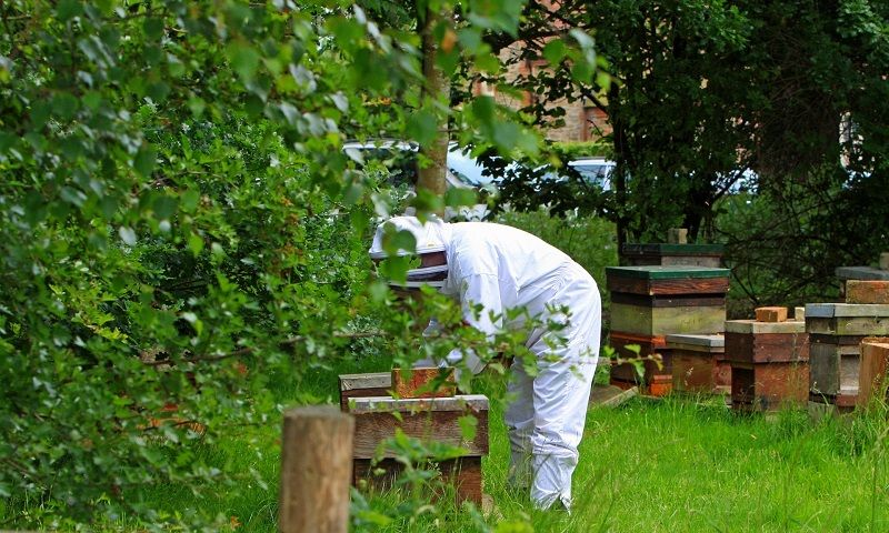 Beekeeping Supplies Near Me: Find the Best Places Near You ...