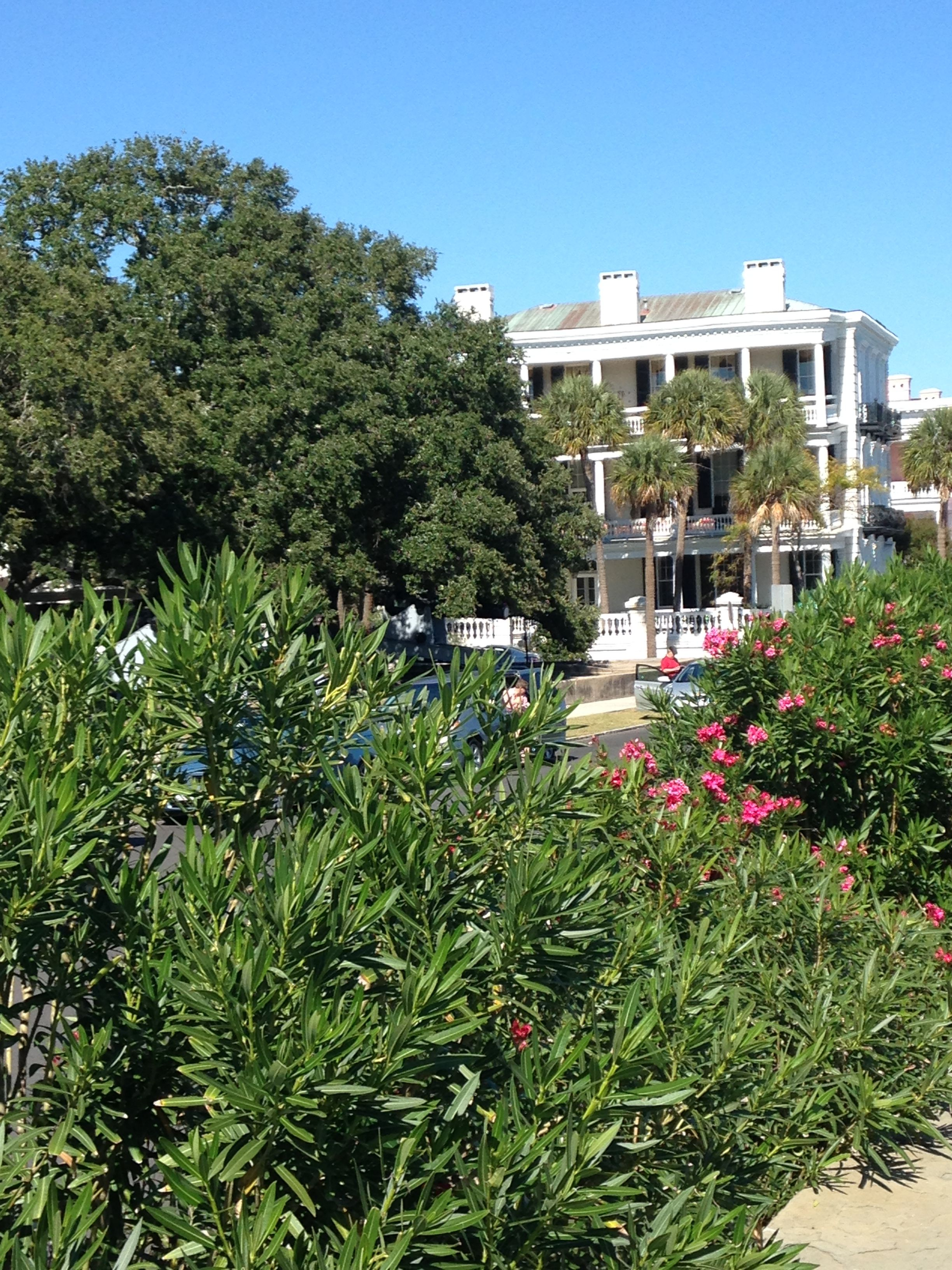 Picture From Charleston Thought The Bushes And Trees In The