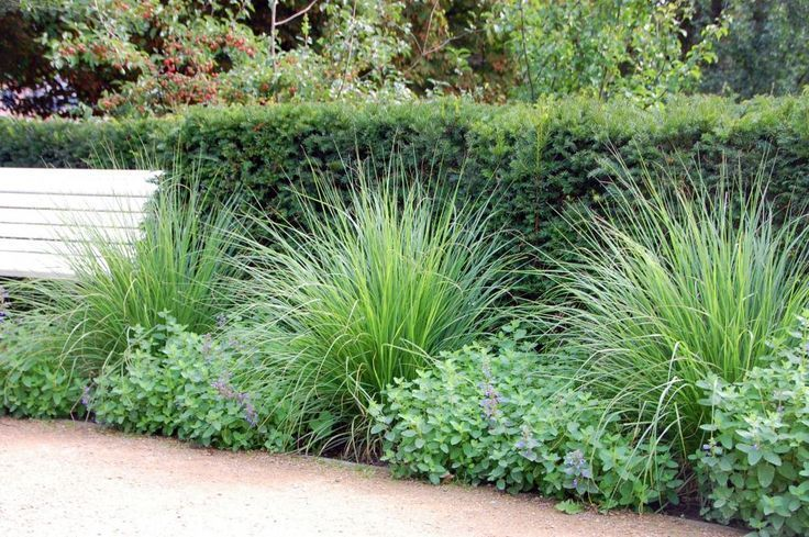 Sublime: The long yew hedge alone might seem boring but the grasses The long yew hedge alone might seem boring but the grasses