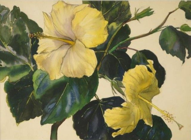 Jessie Arms Botke (1883-1971) - Hibiscus flowers, watercolor, 27,9 x 40,6 cm.