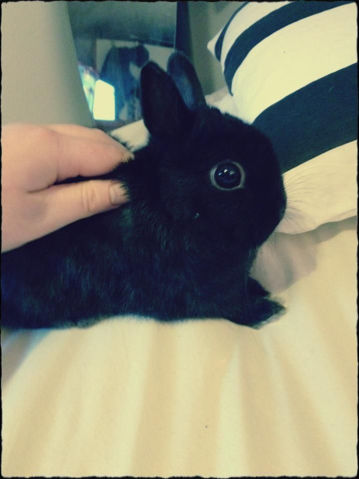 This Looks Like Another One Of My Rabbits うさぎ 可愛い ウサギ