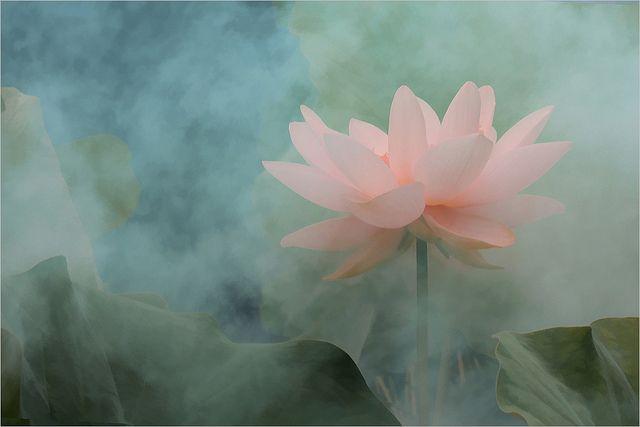 Lotus Flower surreal series -  by Bahman Farzad, via Flickr