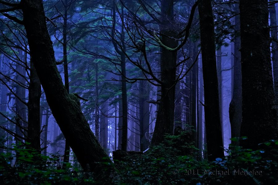 Reminds me of a dreamy forest from a fairy tale