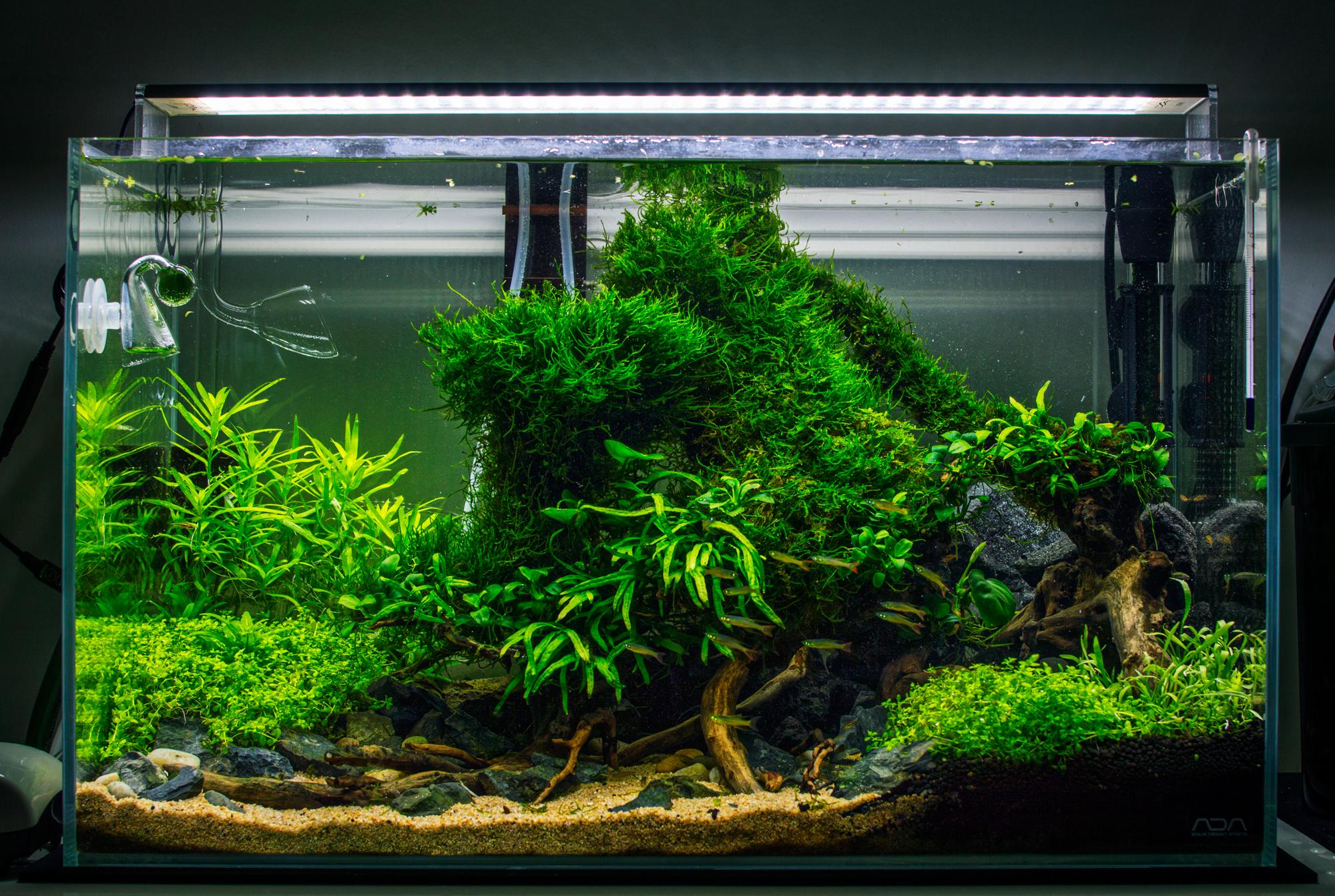 Impressionnant De Entretien Aquarium Concept