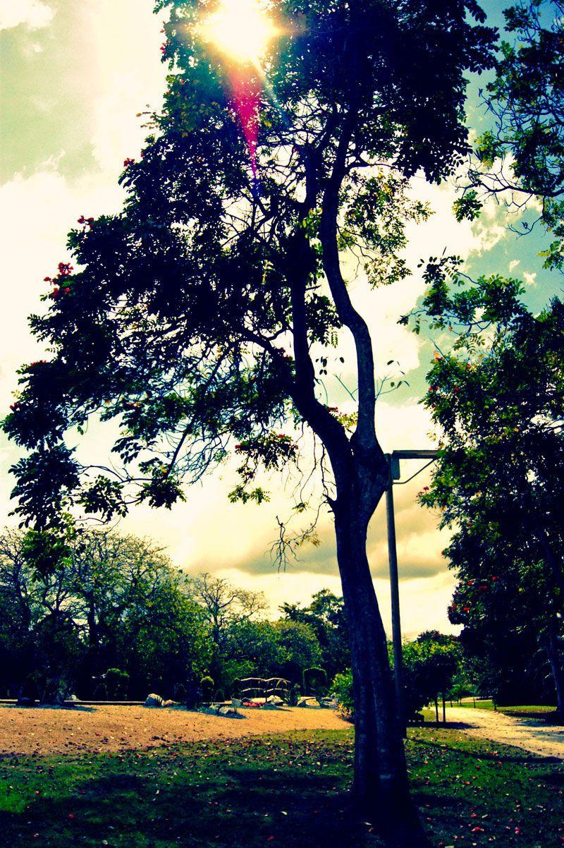 El Bosque del Patrimonio, Jardín Botánico de Caguas