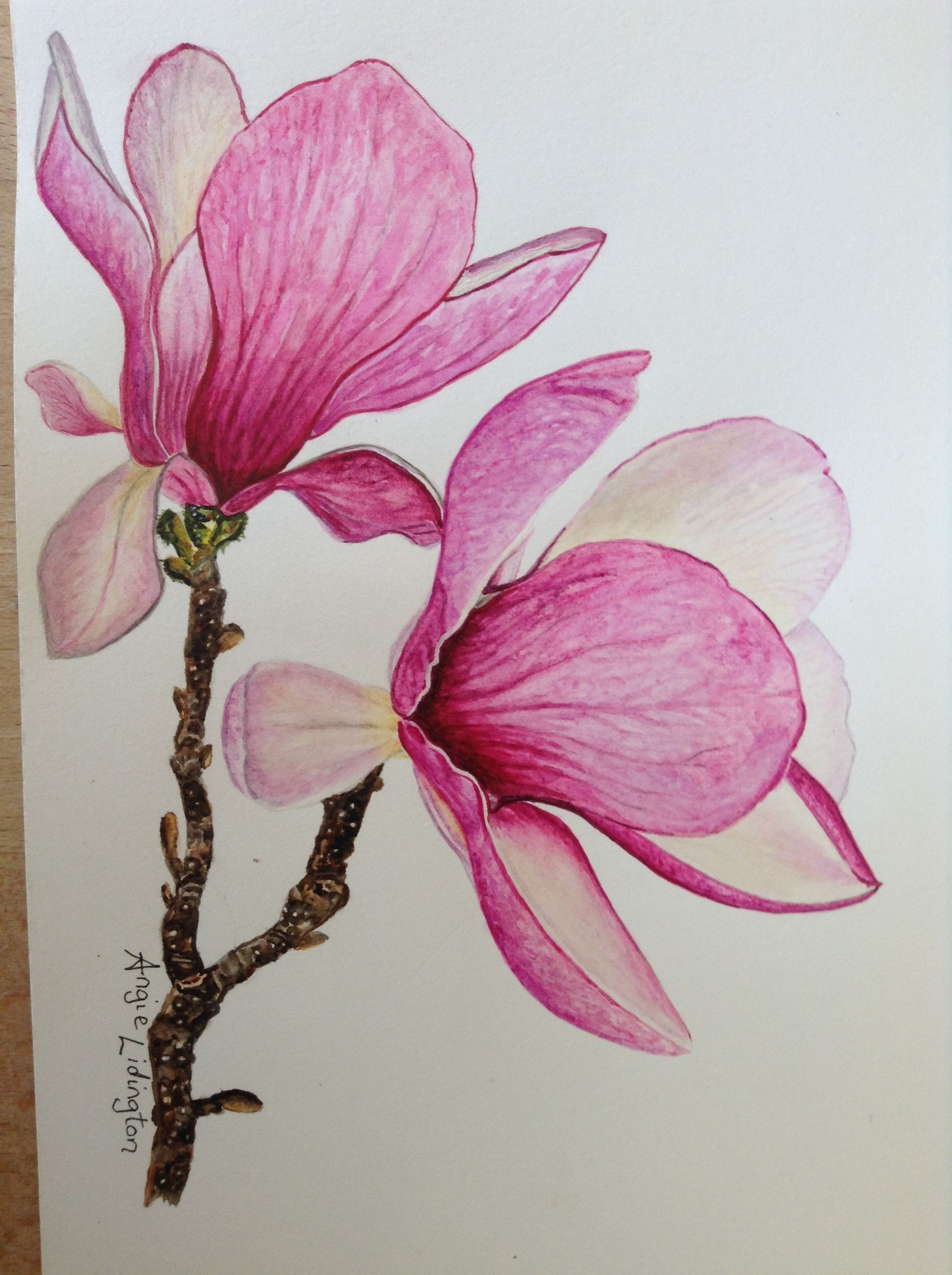 Magnolia Flowers Painted By Me In Watercolours Using An Anna Mason Online Video Tutorial Watercolor Flowers Paintings Flower Drawing Botanical Painting
