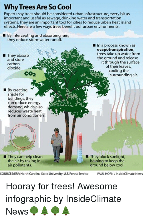 Why Trees Are So Cool Experts Say Trees Should Be Considered Urban Infrastructure Every Bit As Important And