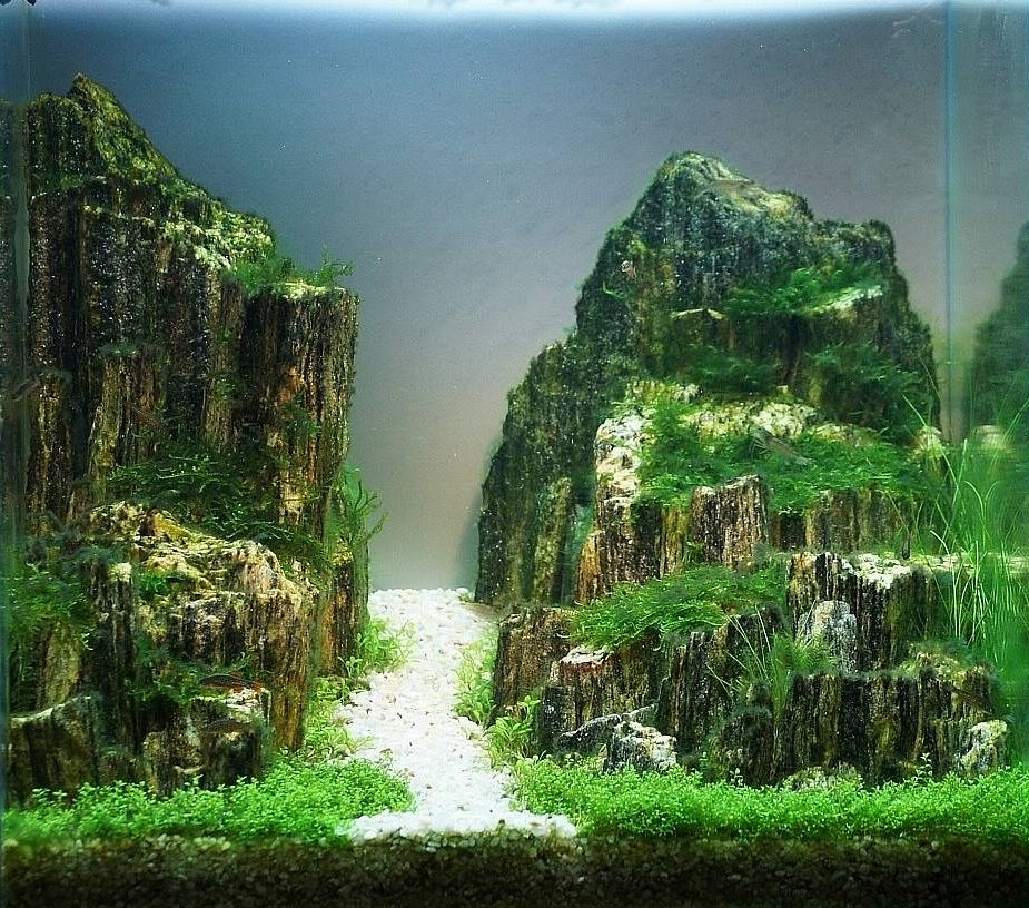 Planted Aquarium Design Contest 2013. Results Of Members Of The Jury Voting  | Все для