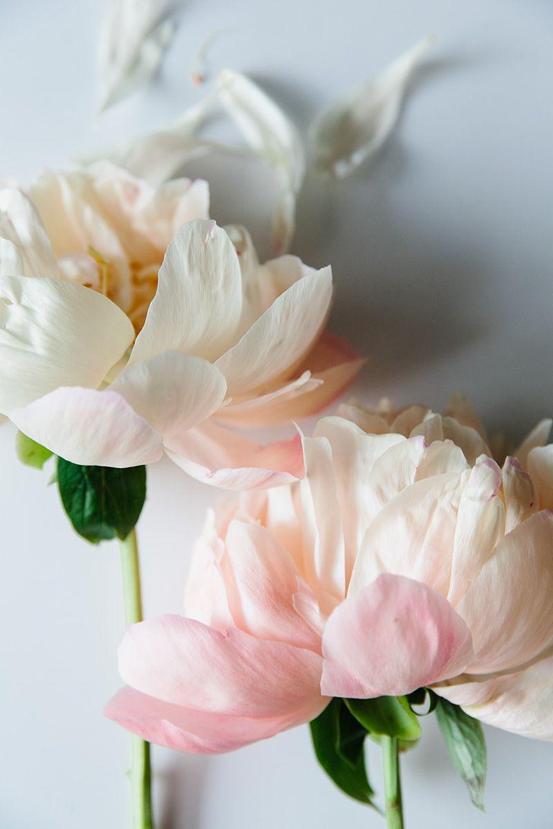 Favorite Things Flores Bonitas Peonias Cor De Rosa Amor Flores