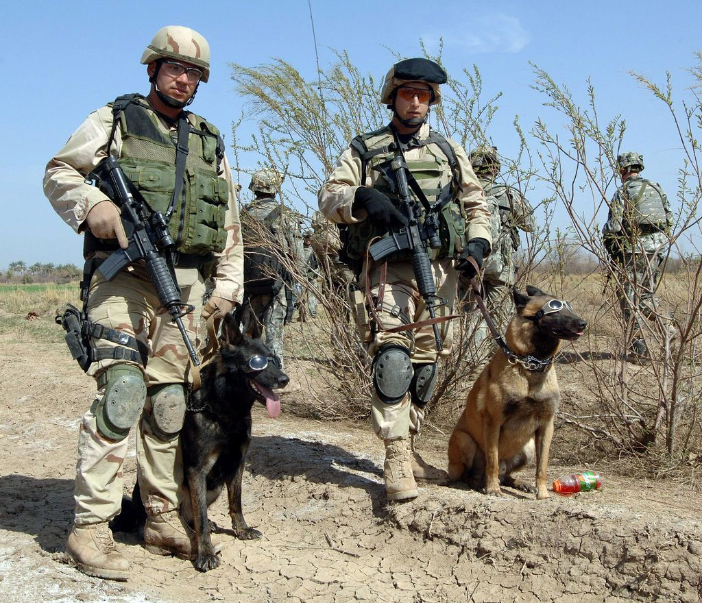 060228A1211S162 Military dogs, Military working dogs