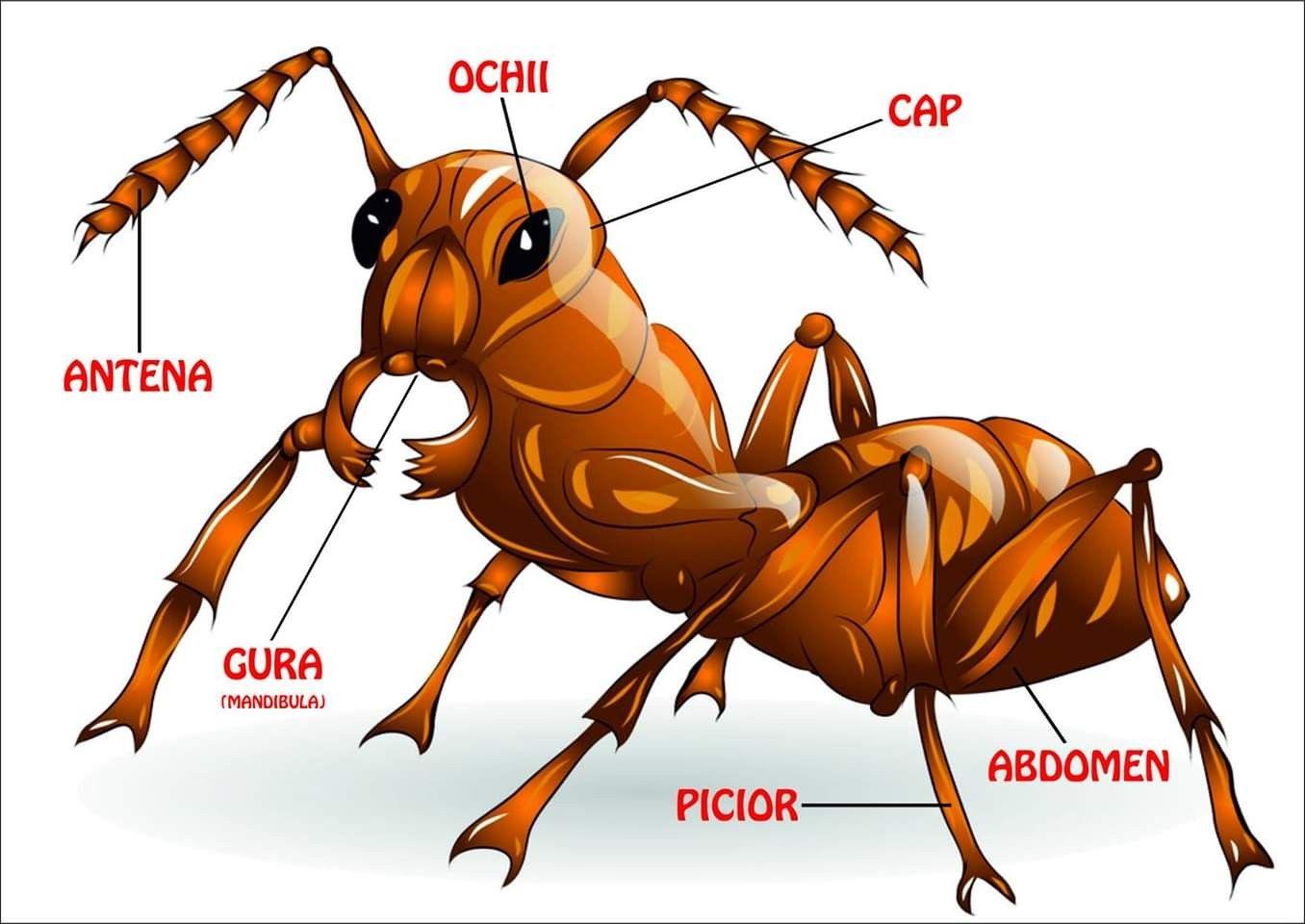 înregistrarea insectelor