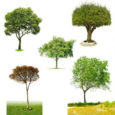 Layered Psd Trees Psd Files Gfxnerds Photoshop Landscape Tree Psd Tree Photoshop