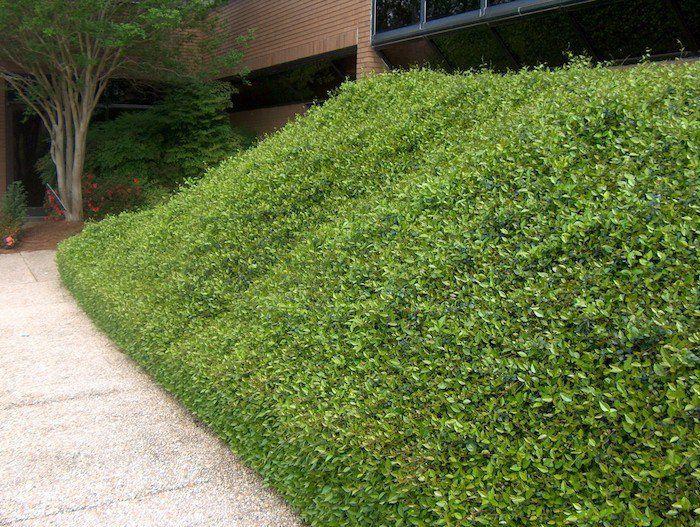 Plante couvre sol un tableau de couleurs naturelles dans for Idees plantations exterieures