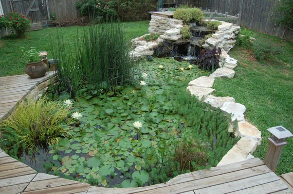 Water plants for ponds pond plants 12 water for Pond with plants