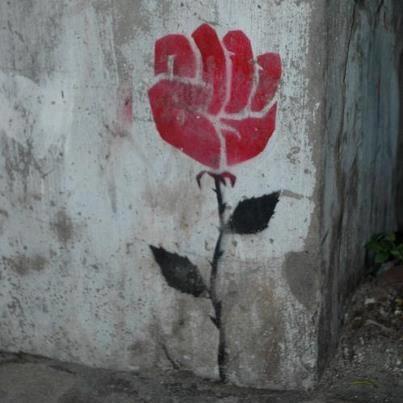 resistance rose