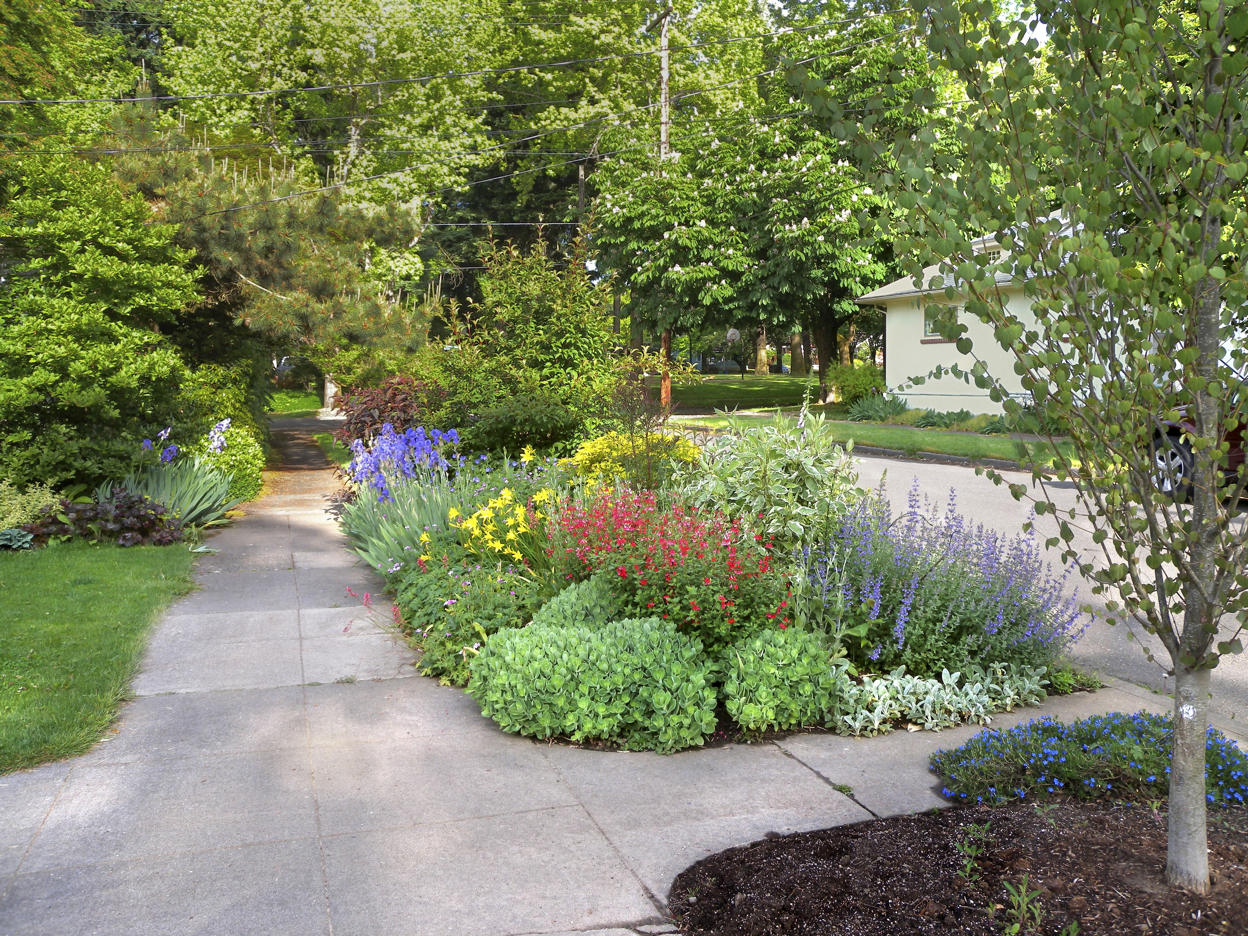 Increase Your Curb Appeal With Tips From Hellstrip Gardening By Evelyn Hadden Available Everywhere Books Privacy Landscaping Lawn Alternatives Amazing Gardens