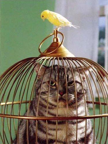 53. Mitä on tapahtunut ennen kuvan ottamista? Mitä tapahtuu sen jälkeen? Mitä kissa ja lintu keskustelevat? Keksi ja kirjoita.