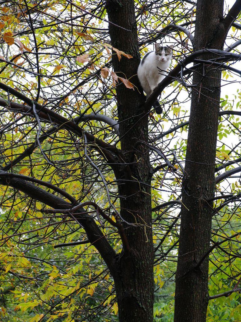 Cat in a tree | par MarieLynn