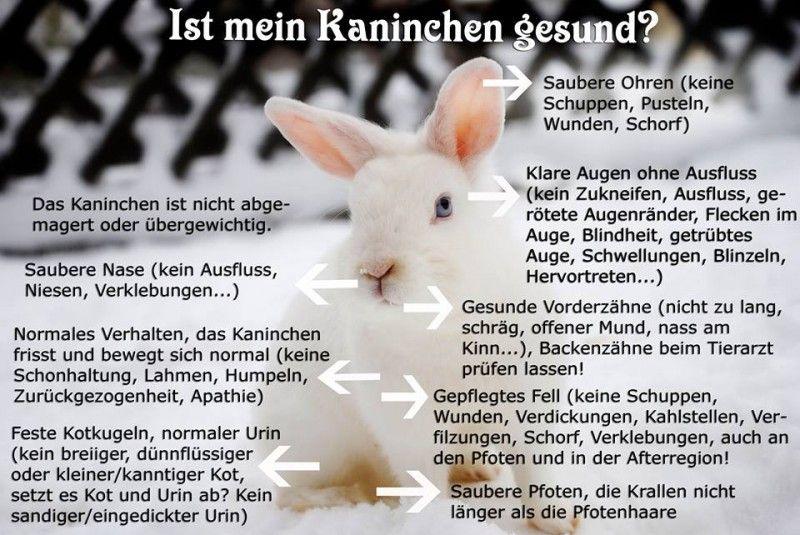 Ist Mein Kaninchen Krank Kaninchen Hasen Rassen Hase Kaninchen