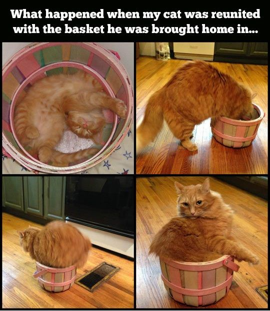 Cat reunited with a bucket