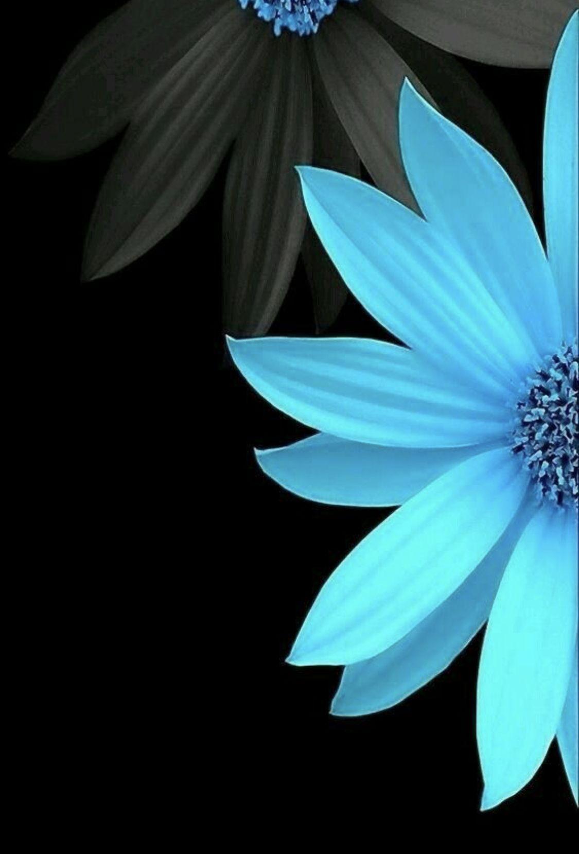 Black Turquoise Blue Flower Wallpaper Art Wallpaper Flower Wallpaper