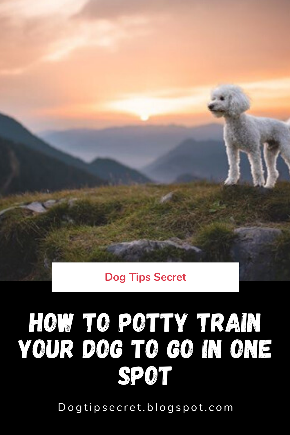 How To Potty Train Your Dog To Go In One Spot Dog Tips Secret In 2020 Training Your Dog House Training Puppies Online Dog Training