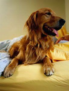 Dog Jumping On Bed At Night
