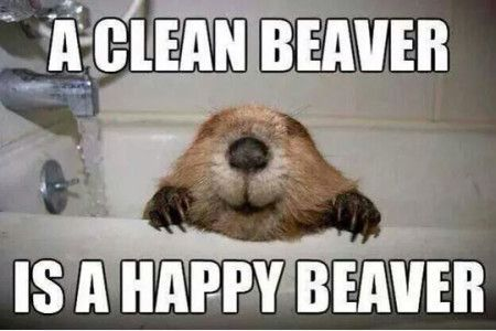 Funny Memes Clean Animals : Funniestmemes funny memes a clean beaver is a happy