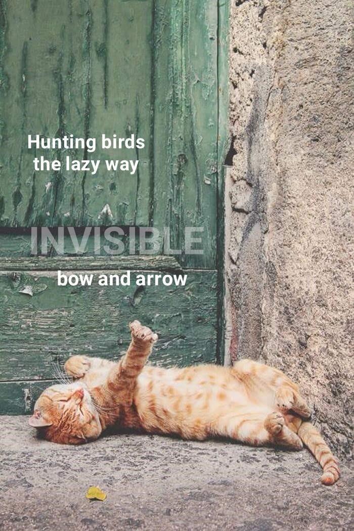 Hunting birds the lazy way