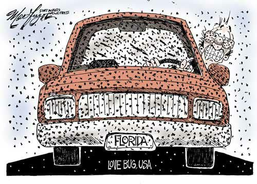 Florida Love Bugs Are In The Air And On Your Windshield And In