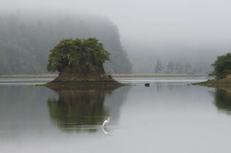 Vancouver Island BC | last night I dreamt I lived in the ...