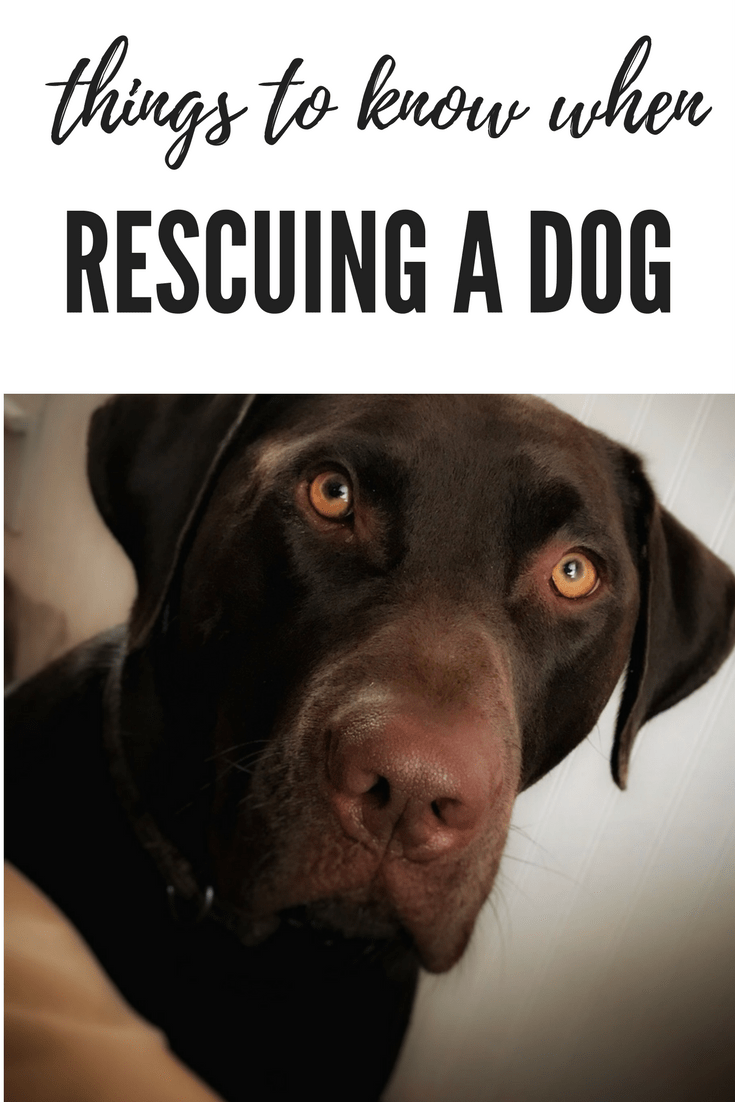Things To Know When Rescuing A Dog Dogs, Shelter dogs