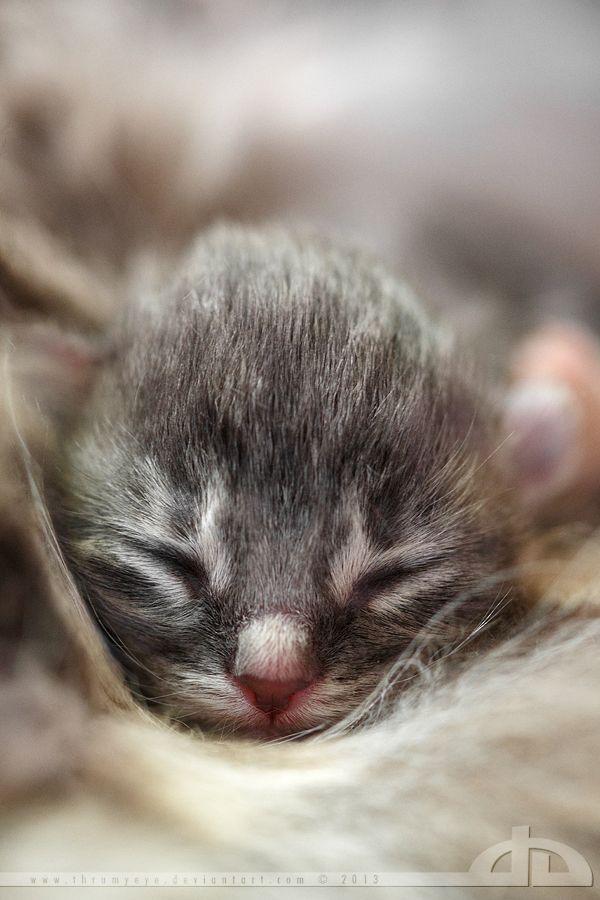 New Kitten Cats Pretty Cats Animals