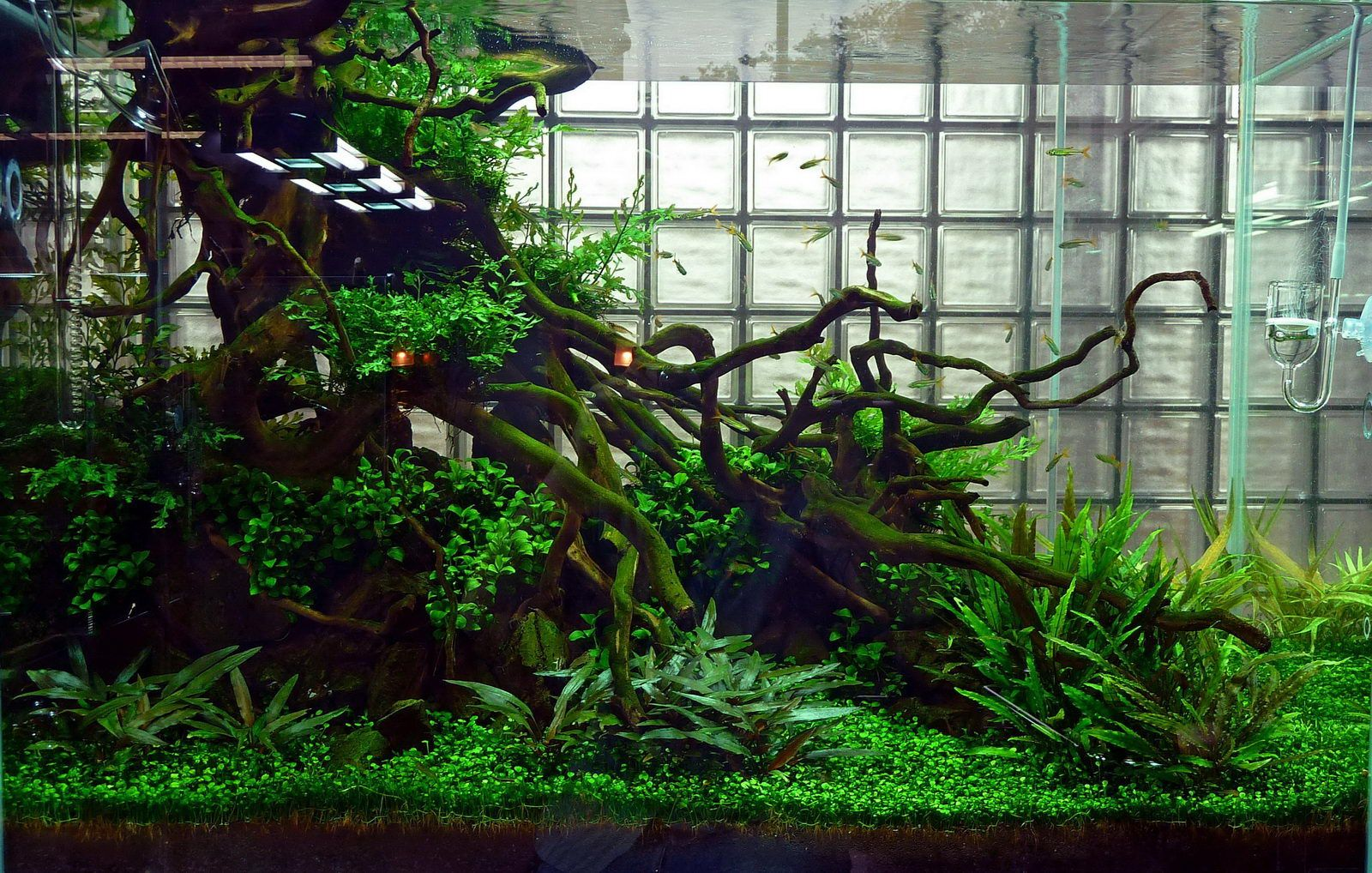 Some nice tips and tricks for Aquascaping - in German Grundlegende Formen im Aquascaping - Wasserpflanzen - Wasserpflanzendünger