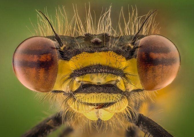 25 bijzondere macrobeelden en close-up beelden