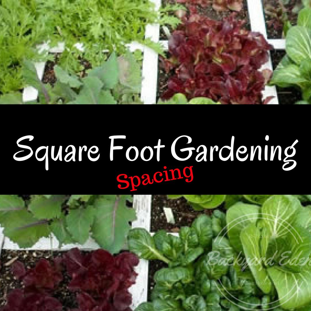 Square Foot Gardening Spacing - Backyard Eden