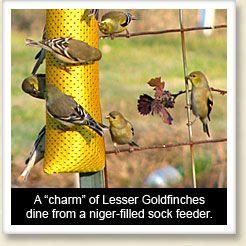 Top ten bird feeding tips | Bird feeders, Birds, Backyard ...