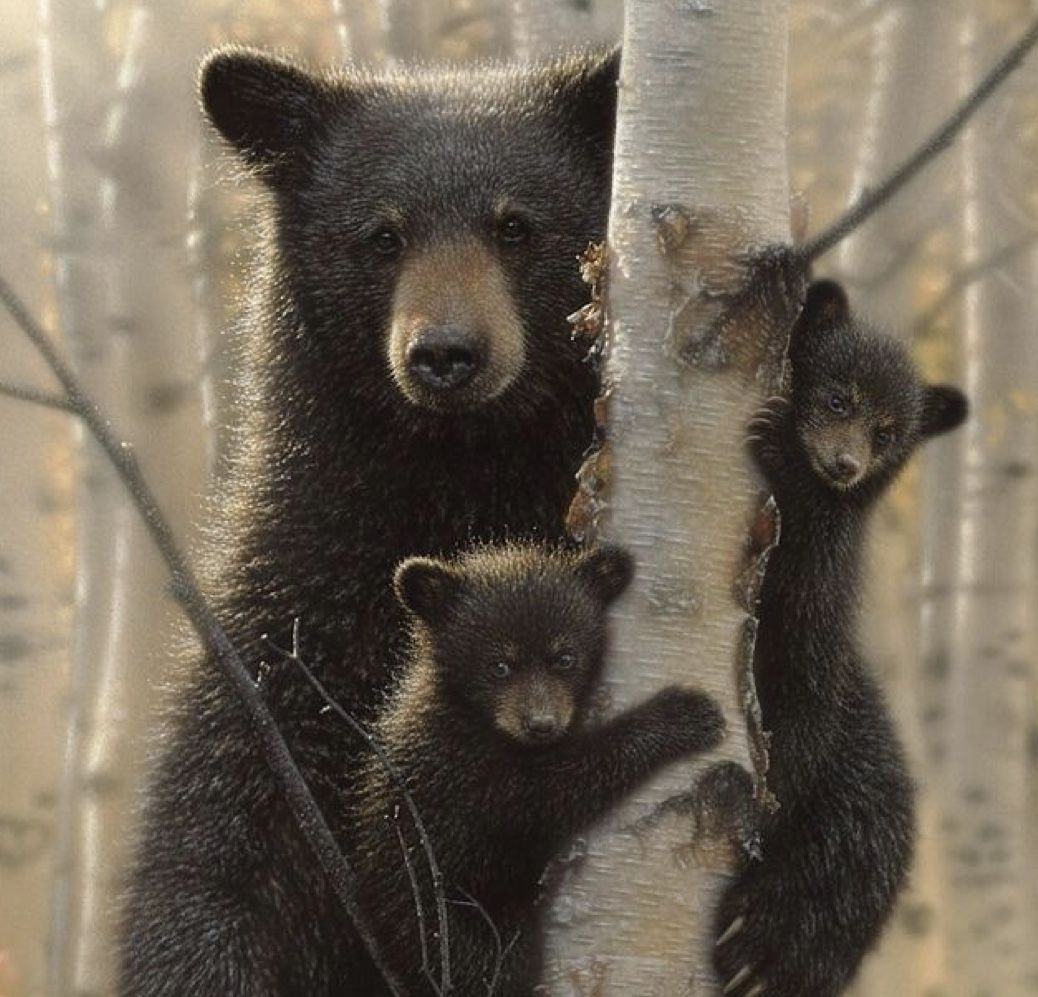 Pin By Chinatsu On Mother S Love Black Bear Baby Black Bear Square Canvas