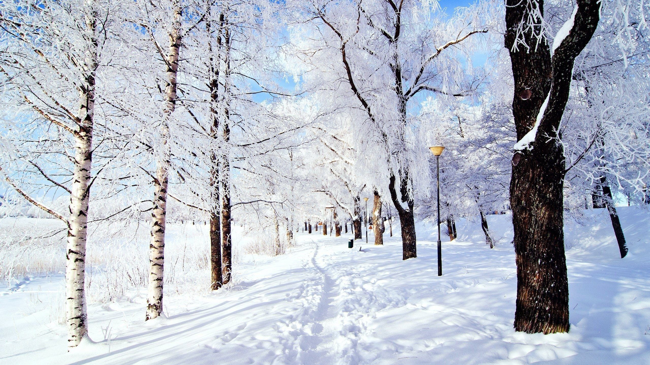 Snow wallpapers images on hd wallpapers pinterest snow snow wallpapers images on voltagebd Choice Image