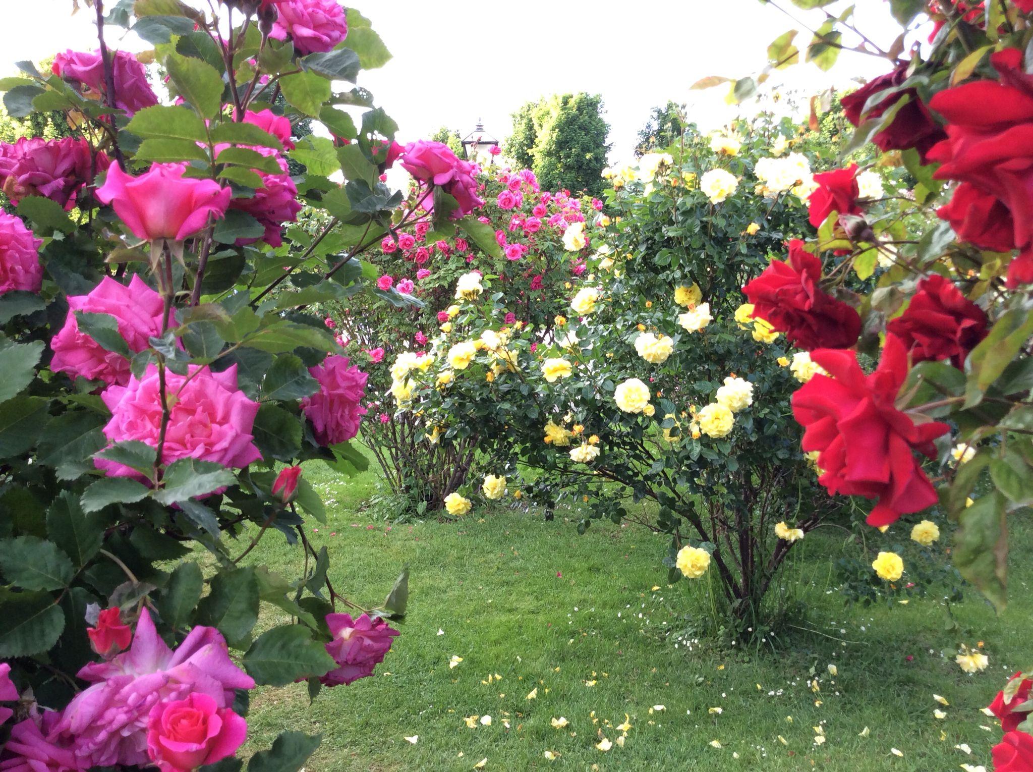 Cores nos jardins de Viena, Áustria
