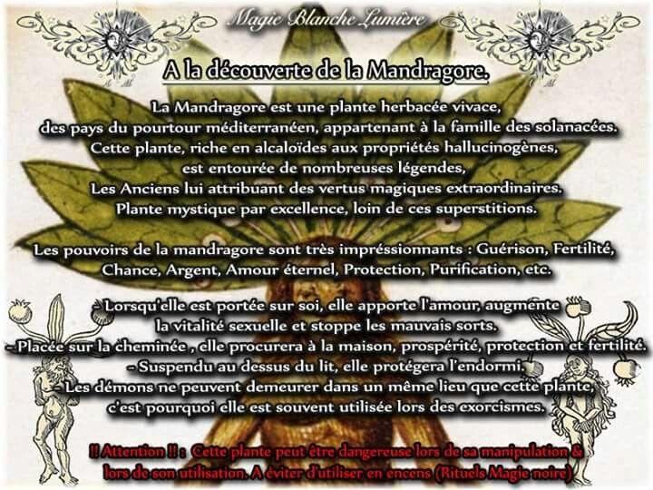 A La Decouverte De La Mandragore Page Facebook Spiritualite Magie Blanche Lumiere Magie